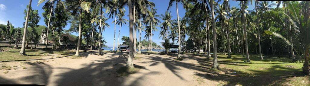 Crystal Bay Nusa Penida Bali Palm Trees