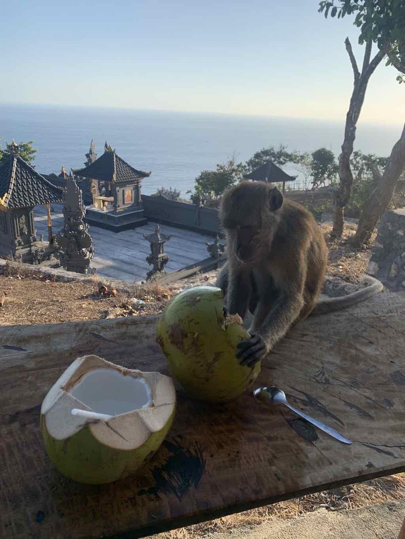 Kelingking Beach Nusa Penida Bali monkey
