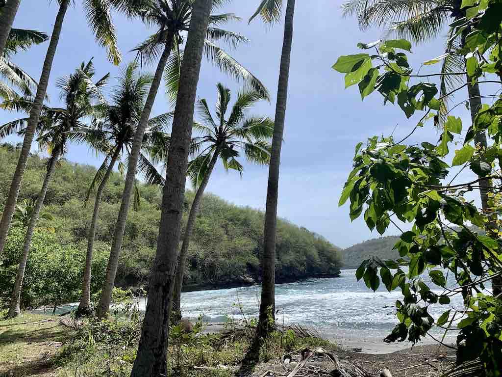 Palm trees Pantai Gamat Bay Beach Nusa Penida Bali
