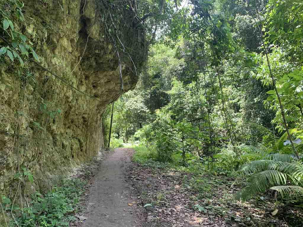 Tembeling Forest Nusa Penida Bali