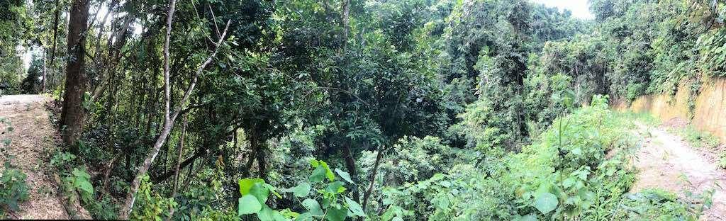 Temeling Nusa Penida Bali Forest