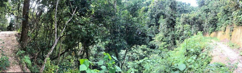Temeling primal forestTembeling Nusa Penida