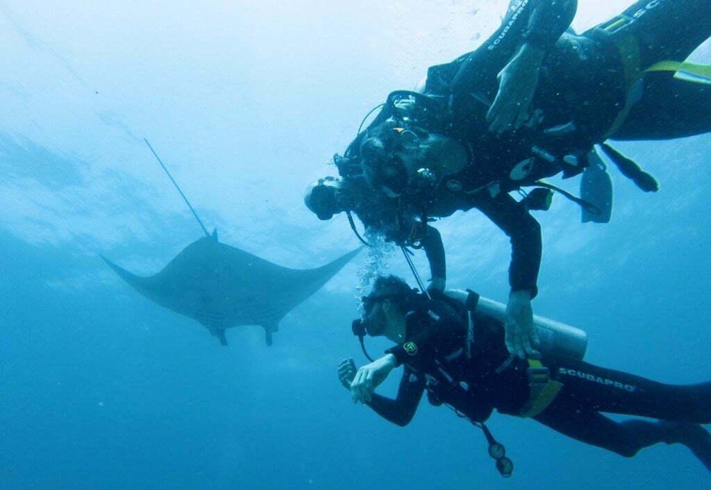 discovery dive Manta Warnakali Nusa Penida