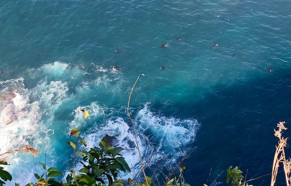 Manta Ray Manta Point Nusa Penida