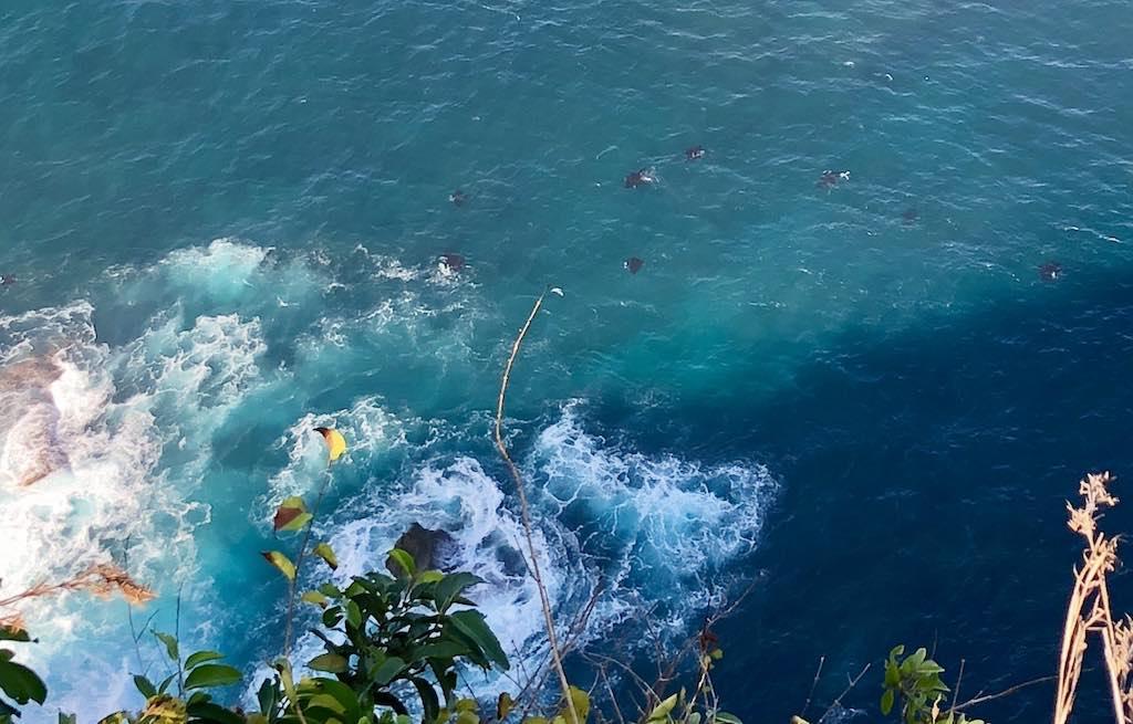 Manta Point Manta Rays Nusa Penida Bali