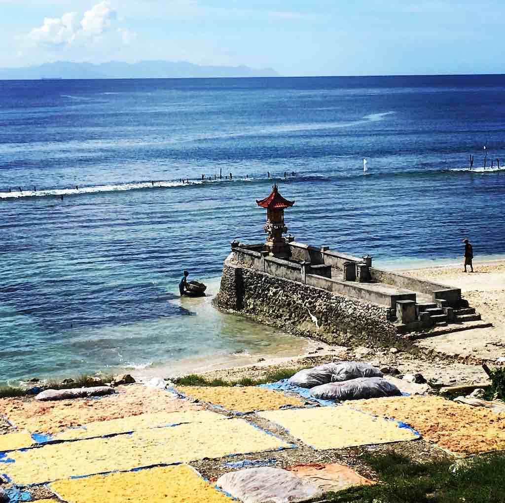 Rumput Laut di Nusa Penida Bali