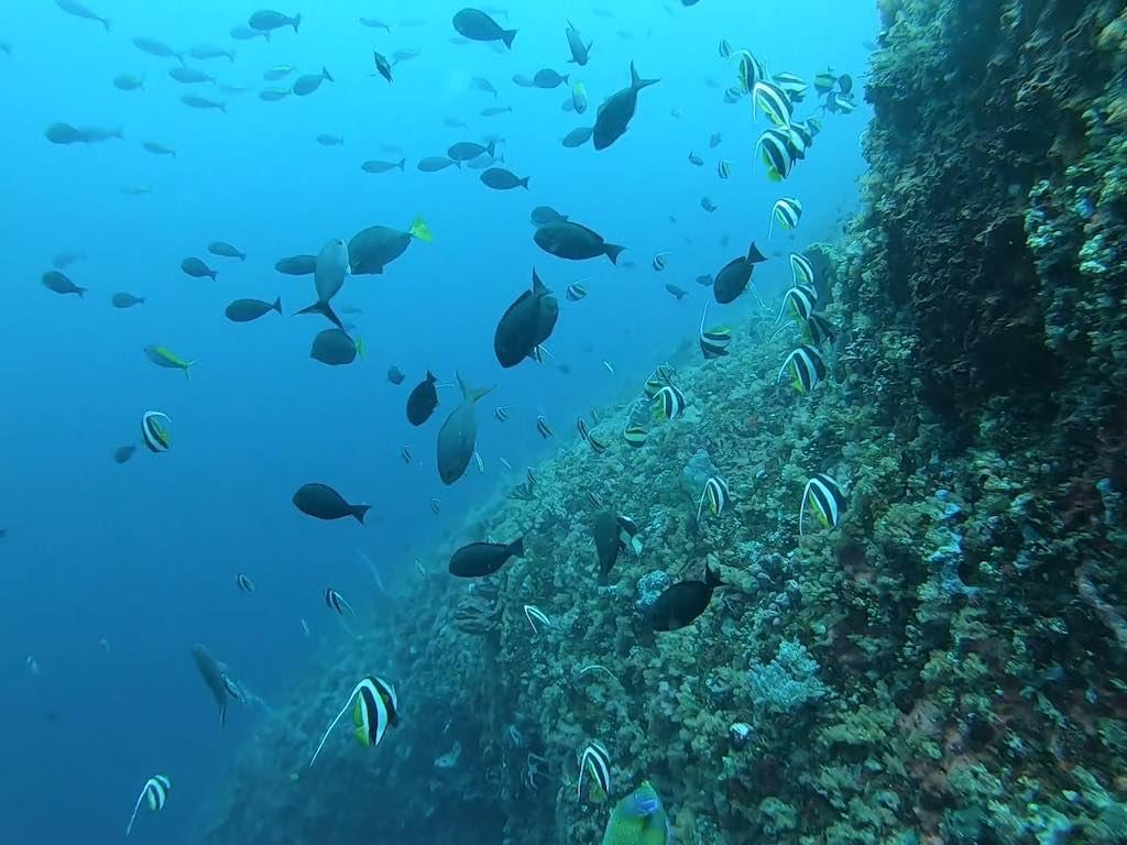 scuba diving in Nusa Penida Bali