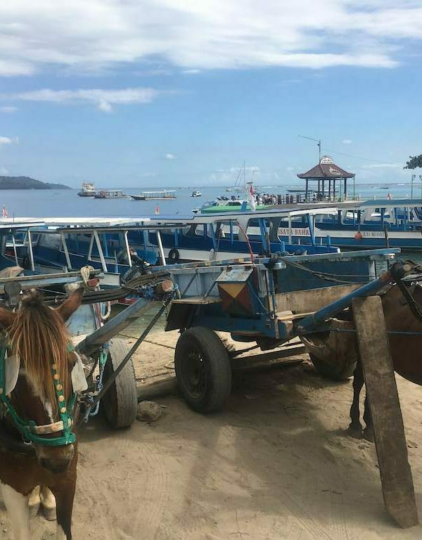 Gili Islands vs Nusa Penida horse ride