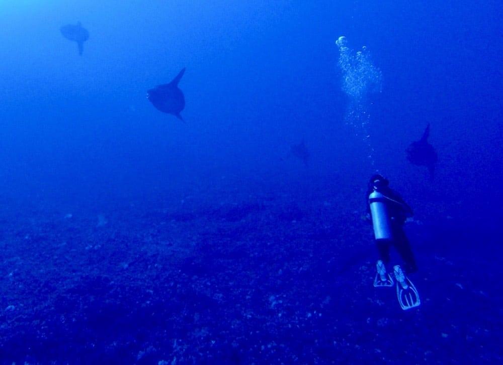 Mola Mola Nusa Penida Bali